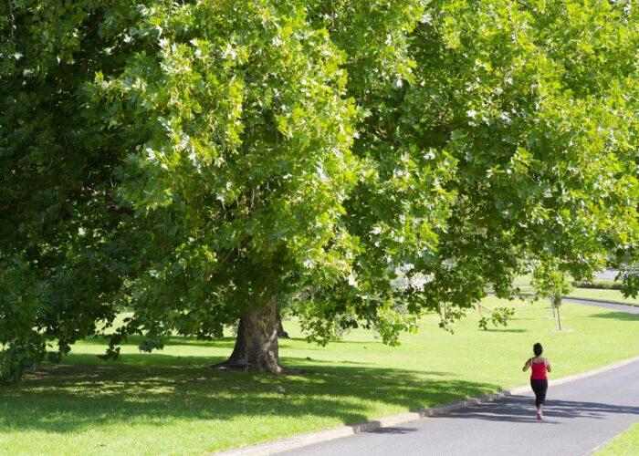 Melbourne Parks Pearce Webster